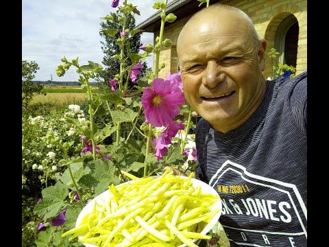 Que faire en avril au jardin faire son engrais pour ces tomates et autres youtube - Que faire au jardin en avril ...