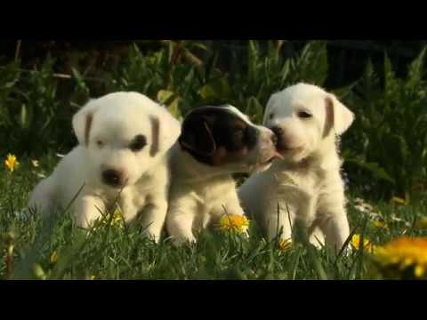 Puppies!! - Getty Images