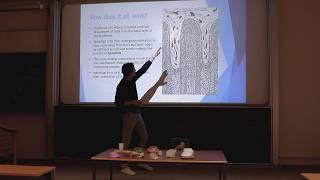 HOOF ANATOMY, BALANCE & FOOT FUNCTION - Cambridge Equine Vet talk 2018