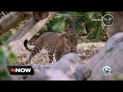New Palm Beach Zoo CEO speaks about conservation