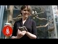 Inside New York's Only Bird Rehab Center