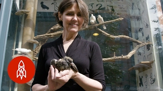 Inside New York's Only Bird Rehab Center