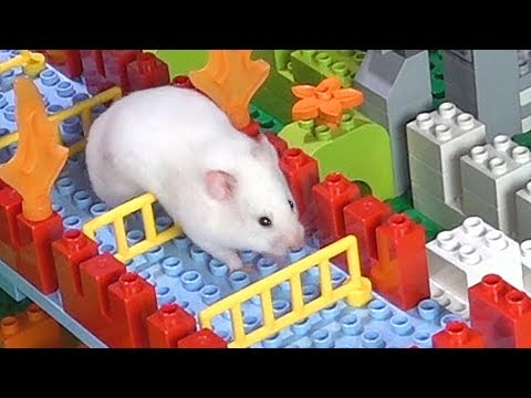 Hamster A-MAZE-ING LEGO Obstacle Course