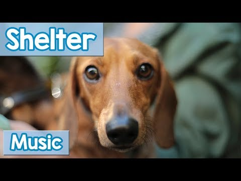 Music for Shelter Dogs! Soothe Your New Shelter Dog with this Music or Use it in a Shelter for Calm!