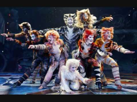 Cats Synopsis