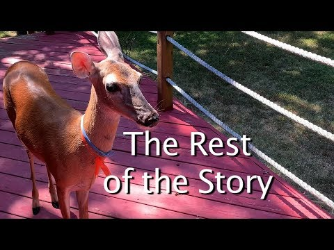The Story of Lucy the Deer
