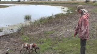 видео Утка Вальдшнеп - все о породе с описанием