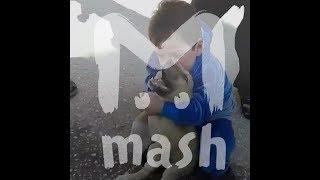 Суровый дагестанский малыш борется с щенком