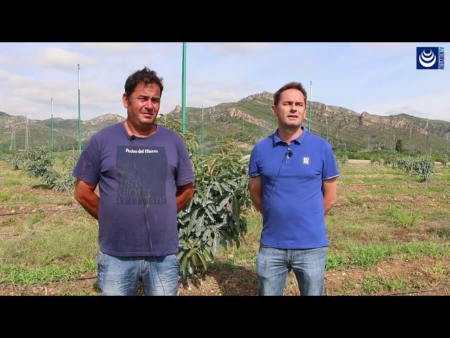 Aguacate · Riego por goteo con Uniram (Valencia)