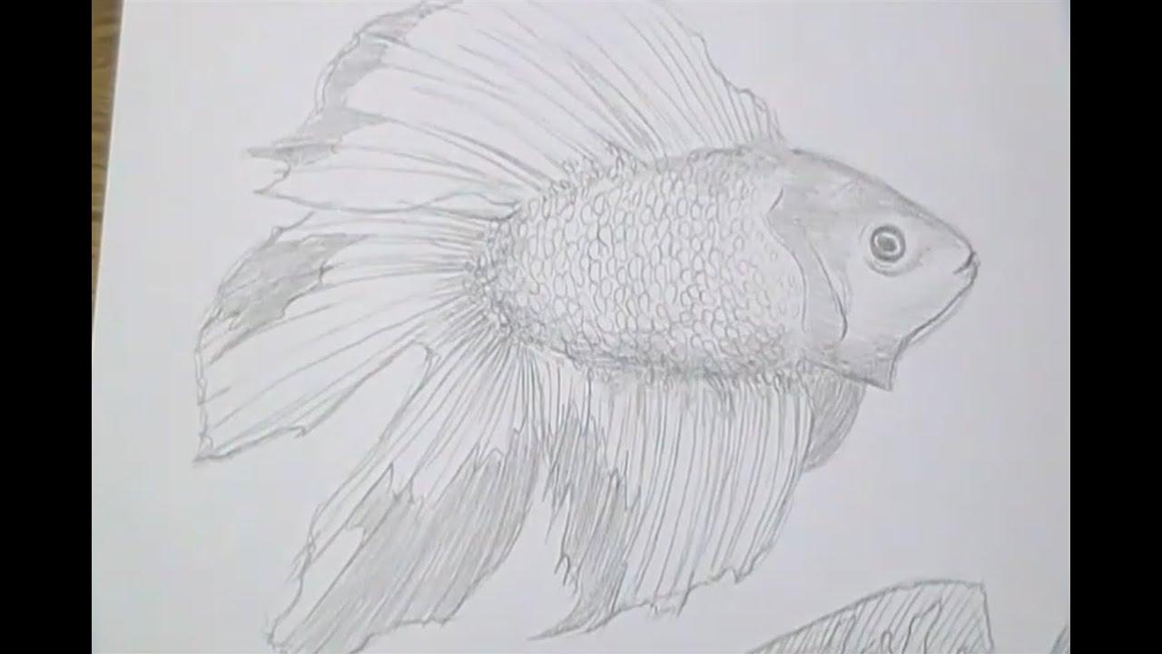 Tutorial Como Desenhar Peixes How To Draw Fish Youtube