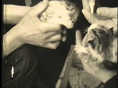 The kitten mascot of a Corvette ship during the Second World War