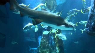 SEA LIFE  Aquarium London 2013