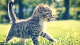 Милые котята и щенята ! (^-^)