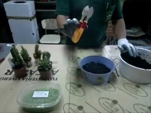 Arreglos cactus composiciones wmv youtube - Composiciones de cactus ...