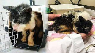 Кот 2 года жил в переноске и вот что с ним стало