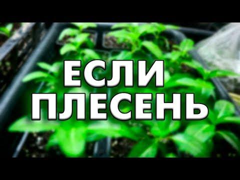 Плесень на земле в рассаде – что делать? | рассада | плесень | петунии | цветы | земле | на