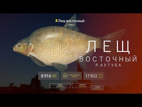 РУССКАЯ РЫБАЛКА 4   RF4 - ЛЕЩ ВОСТОЧНЫЙ, Р.АХТУБА