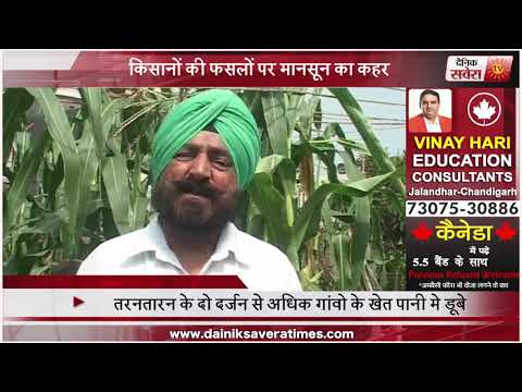 Punjab farmers loses crops and everything alongside Beas river