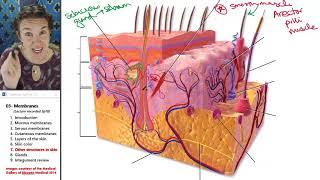 Membranes 7- Skin accessories