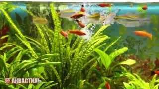 Кормление коретрой аквариумных рыбок. Содержания аквариумных рыб.
