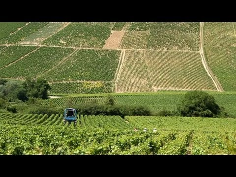 Chablis France • Private Wine Tasting and Tour  of Chablis | European Waterways