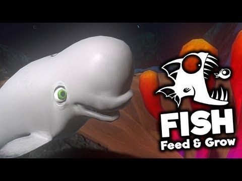 NOWE RYBY NA REJONIE - Feed And Grow: Fish