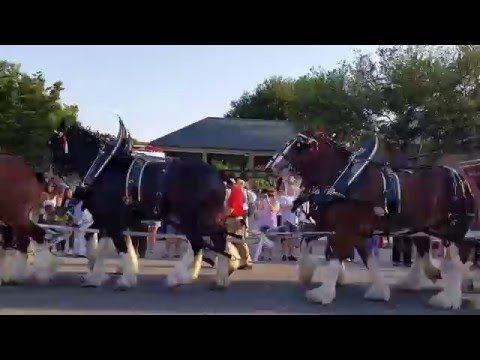 The Budweiser Clydesdale's Visit New Bern, NC