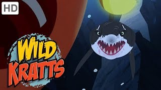 Wild Kratts 🦈 Sharks on the Hunt (Part 1/2) 🌊 Shark Week | Kids Videos