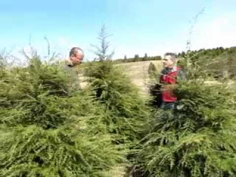 Jeff Hodges Landscape Contractor / Tree Farm - Hemlock & Spruce