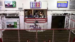 2-25-21 62 hd. Blk. Heifers 557 lbs. @ $158.00  Thank You Nathan Beckman