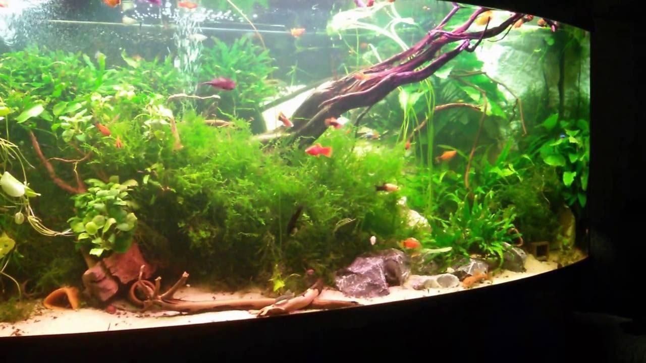 the most beautiful planted platy aquarium tank big tank 1000 liter youtube. Black Bedroom Furniture Sets. Home Design Ideas