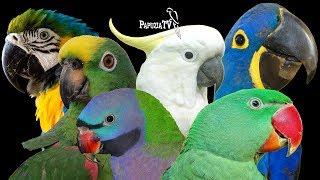 Baixar Wybór papugi - gatunek to nie wszystko