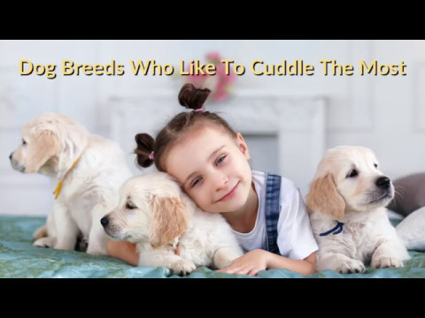 The Breeds Of Dogs That Like To Cuddle Most