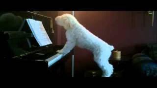Блюз белой собаки