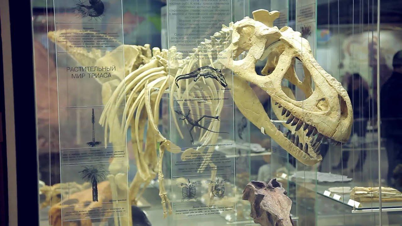 фото дарвиновский музей в москве