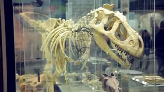 видео Экскурсия в Государственный Дарвиновский музей