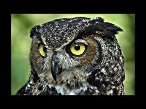 Wise Owl Pictures: HD Slideshow - YouTube