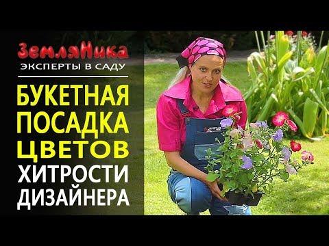 видео: Невероятно обильное цветение и отсутствие сорняков. Петуния и годеция. Букетная посадка. 0+