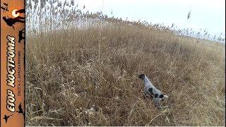 Охота на фазана. Десять мгновений сезона.