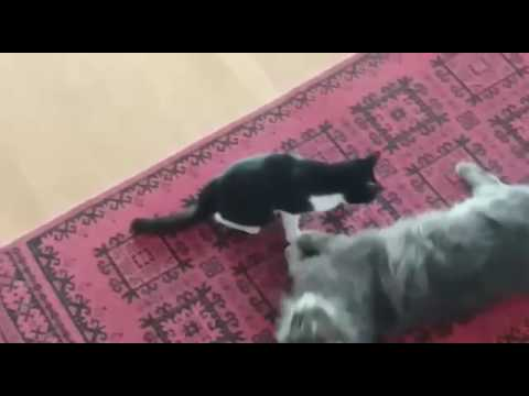 Love Cats Hd Youtube