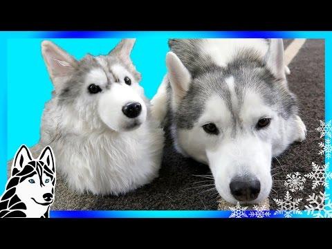 CUDDLE CLONE THE DOGS | CUDDLE CLONE GIVEAWAY