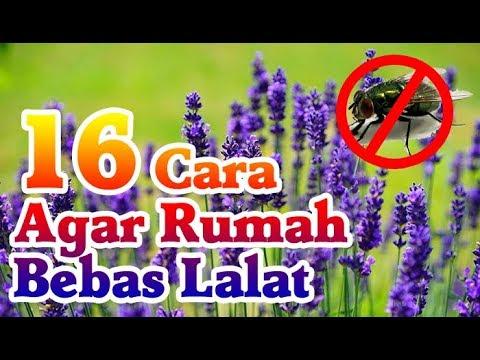 Cara Mengusir Lalat di Dalam Rumah Secara Alami dan Paling Ampuh Mp3