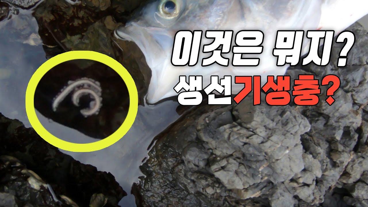 소소한 뉴질랜드 갯바위 찌낚시영상 (문어, 기생충? 특별출연!!ㅋㅋ)