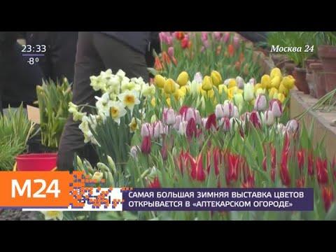 """Самая большая зимняя выставка цветов открывается в """"Аптекарском огороде"""" - Москва 24"""