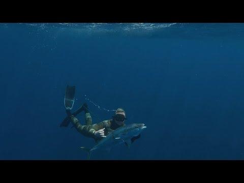 Spearfishing New Zealand   Kingfish Crays Sharks & More