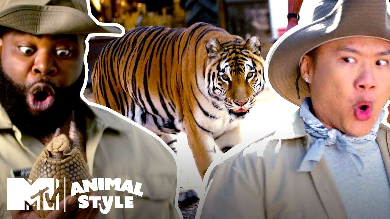 "An Insane Armadillo & A ""Sexy"" Tiger 