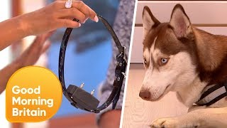 Electric Dog Collars: Should They Be Banned? | Good Morning Britain