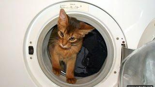 Как научить кошку пользоваться стиральной машиной