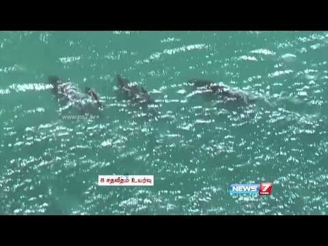 Whale population increases in Mexico
