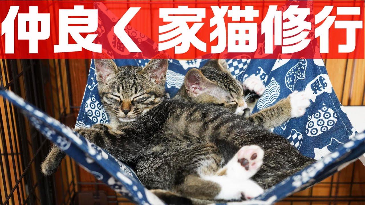 離れ離れになっていた姉妹との再会で安心する野良猫子猫